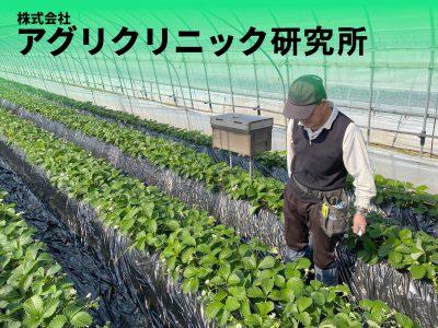 アグリクリーナ~高濃度炭酸ガス処理によるイチゴの抵抗性害虫ハダニの防除技術